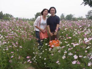 コスモスが咲き乱れる湿地公園
